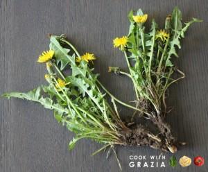 pianta di tarassaco