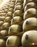 7-	Grana Padano, a PDO product, has a very similar taste and is a great, less expensive substitute for Parmigiano-Reggiano. Main differences: Grana Padano's milk doesn't have to come from grass-fed cows; it can also be added with lysozyme (a natural preservative); it is usually aged for just 12-18 months instead of 24.